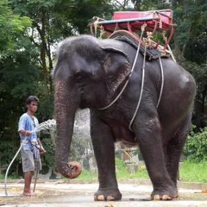 Full Day Elephant Trekking